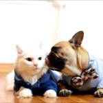 Are French Bulldogs Good With Cats