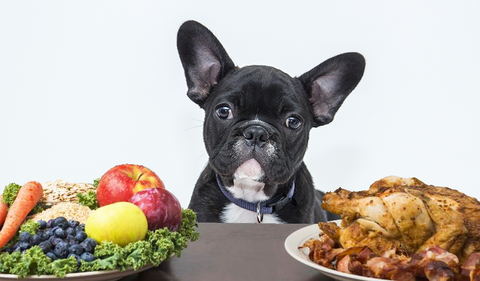 Can French Bulldogs Eat Raw Chicken?