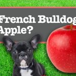 Can French Bulldogs Eat Apples?